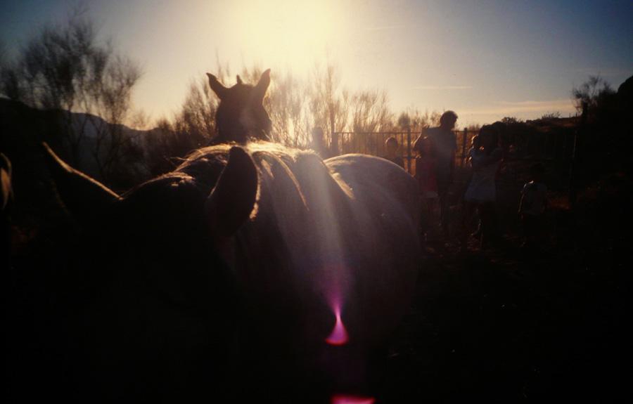Freunde und Pferde.